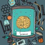 Lo que sabemos del cerebro